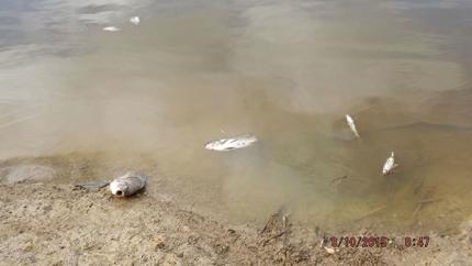 포스코대우의 팜유 농장이 들어선 뒤 지역주민들이 식수와 생활용수로 사용하던 비안 강이 오염된 모습 ©Amo Anselmus