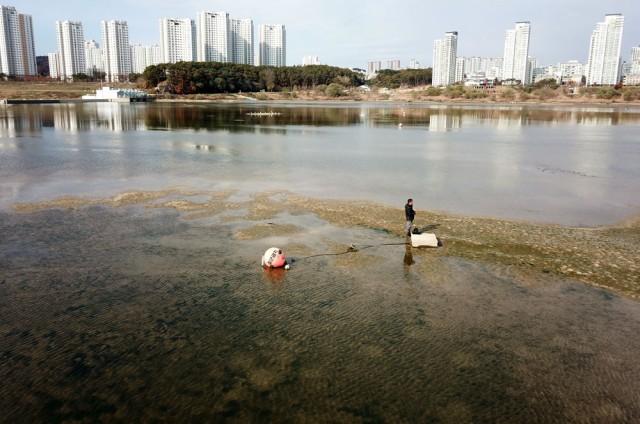 세종보 물이 빠지면서 보이는 강바닥이 온통 녹조가 낀 모습이다.ⓒ 김종술