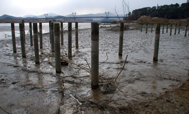 4대강 사업 당시 새들의 쉼터로 박아 놓은 말뚝도 물 밖으로 노출되었다.ⓒ 김종술