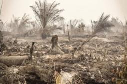 미국 전 하원의원, 열대림 파괴 기업 포스코대우에 대한 투자 중단 촉구