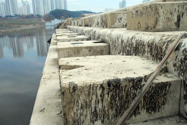 세종보 콘크리트 고정보가 바짝 말라붙으면서 녹조 사체가 덕지덕지 달라붙어 있다.ⓒ김종술 기자