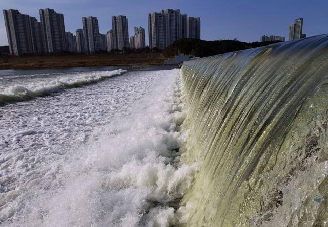 정부의 4대강 수문개방으로 수문이 열린 세종보에서 녹색 강물이 쏟아지고 있다. ⓒ 김종술