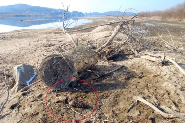 천연기념물 330호 수달이 걸려있던 폐그물.ⓒ 김종술