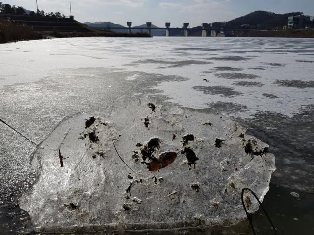 얼음으로 변한 공주보 상류, 얼음판에 녹조가 김발처럼 덕지덕지 달라붙었다.ⓒ김종술