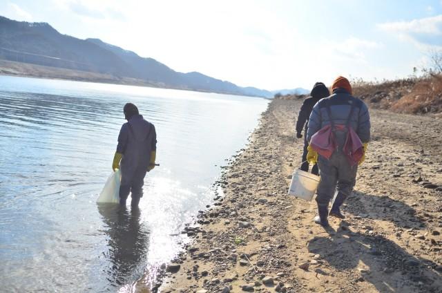 수자원공사와 금강유역환경청에서 조개를 수거해 다시 강으로 되돌려보내고 있다.ⓒ이경호