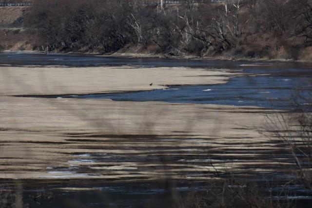 하얀 모래톱 위로 얕은 물길이 흘러가는, 이전의 회천의 모습을 되찾아간다. 재자연화되고 있다. ⓒ 대구환경운동연합 정수근