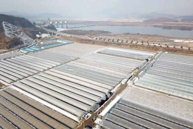 백제보 수문개방으로 지하수가 부족해지고 있다고 주장하는 자왕리 비닐하우스 농가가 제방을 놓고 맞닿아 있다.ⓒ 김종술