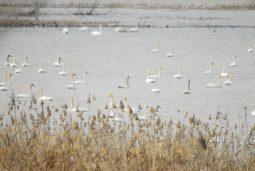 [논평]보호구역 확대를 통해 친환경·생태 정부로
