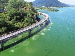 [논평] 낙동강 조류 대발생은 재난! 정부는 국가재난사태선포하고 낙동강을 특별재난지역으로 지정하라!