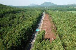 [제주] 비자림로 삼나무 숲길 확·포장 공사를 전면 철회하라