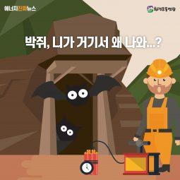 [에너지 진짜뉴스] 박쥐, 니가 거기서 왜 나와…?