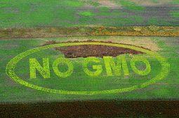[먹고 입고 사랑하라] GMO 수입 세계 1위 국가 한국, 식량 주권 지킬 수 있을까