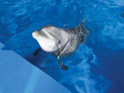 [해양보호] 일본 타이지에서 온 돌고래 태지는 돌아갈 고향 바다가 없다
