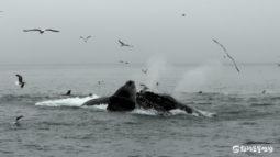 [해양보전] 바다의 경이로운 생물, 고래를 위한 날