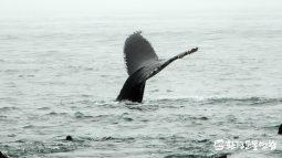 [해양교육후기] 깊고 넓은 바다에서 자유롭게 헤엄치는 혹등고래 무리