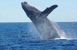 [해양보호] 고래가 온실가스를 줄이고 지구온난화를 해결할 수 있다고요?