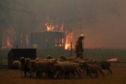 [논평] 호주 산불 비상사태, 기후위기 언제까지 외면할 텐가
