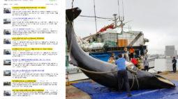 [해양보전] 해양포유류보호법이 생겨도 지금처럼 밍크고래가 잡힐까요?