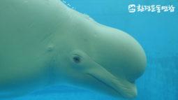 """[해양보전] 수족관 고래를 움직이는 유일한 동력은 """"배고픔""""이다"""