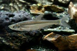 [모금함] 🐟 강과 하천의 민물고기가 점점 줄어든 이유는?