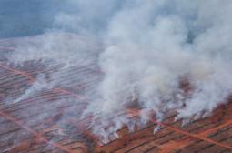 [성명서] 한국기업은 열대우림 파괴자라는 오명을 언제쯤 씻을 것인가