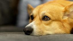 [우리동생X환경운동연합] 동물은 당신과 사는 게 행복하지 않아