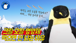 [펭귄의날 특집-영상] 남극 극지연구소 김정훈 박사님과 함께 하는 펭귄Q&A – 크릴편