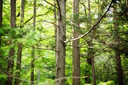 [기고]나무를 베어 기후위기를 해결한다고?