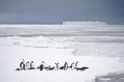 [워크숍후기] '남극해양보호구역(MPA) 중장기 전략수립' 1차 워크숍