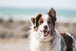 [우리동생x환경운동연합]반려견 행동교육, 모든 개는 감정이 있어요