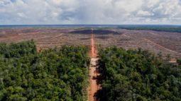 [보도자료] 국제산림관리협의회(FSC),  열대우림 파괴 기업 코린도 회원 자격 박탈