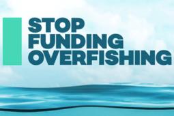 WTO 나쁜 수산보조금 폐지 협상, 바다를 구할 시간이 이제 얼마 남지 않았습니다