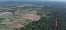 [성명서] 산림청은 캄보디아 툼링 레드플러스 사업의 부실한 운영을  투명하게 인정하고 대책을 마련하라
