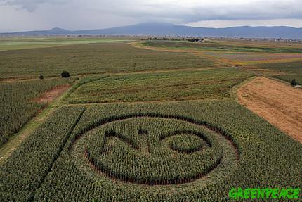 ⓒ 그린피스 Greenpeace / Gustavo Graf