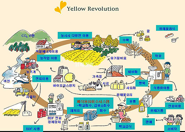 ▲ 소규모 지역이 중심이 된 일본의 유채 자원순환형 사회 그림 ⓒ일본유채네트워크